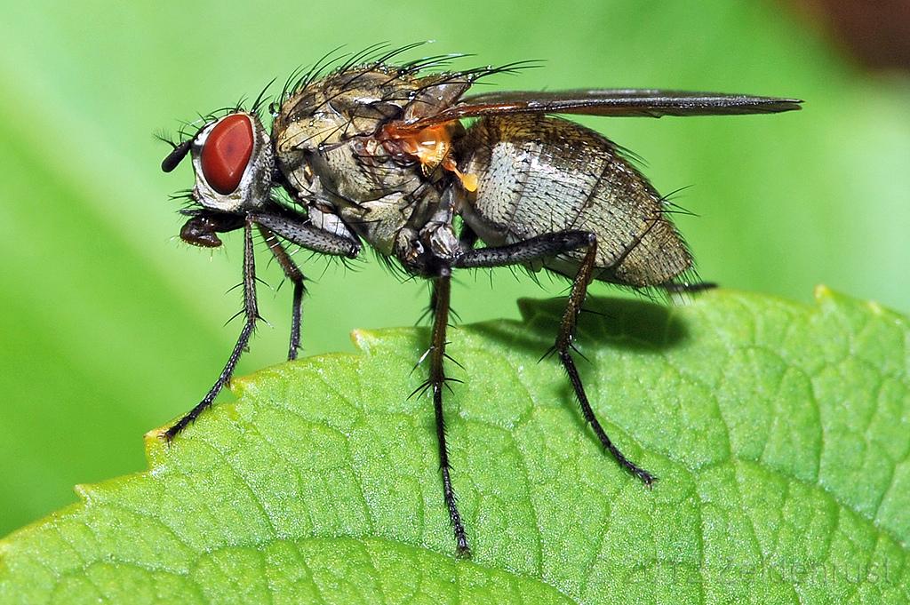 Чем питаются мухи – читайте!