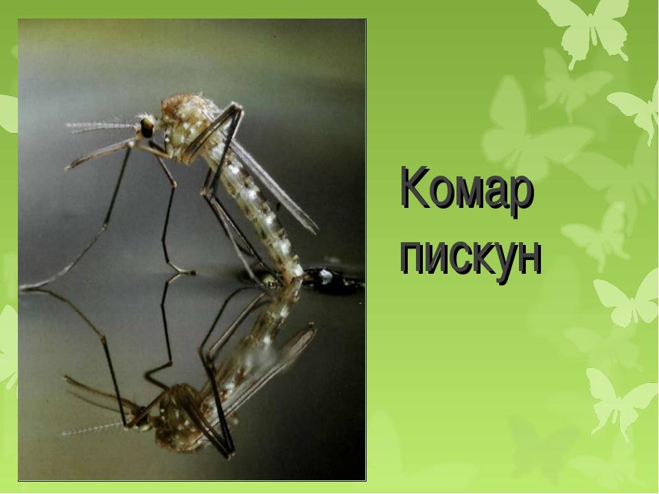 Детеныши комаров. интересные факты о комарах, или за что уважать кровососа