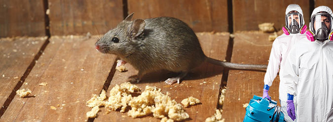 Дератизация-уничтожение крыс и мышей на производстве в москве