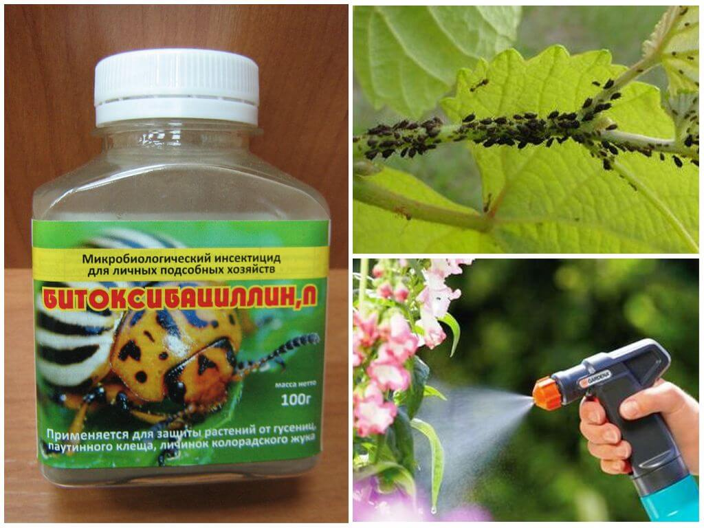 Гусеницы на яблоне: как бороться с вредителями деревьев