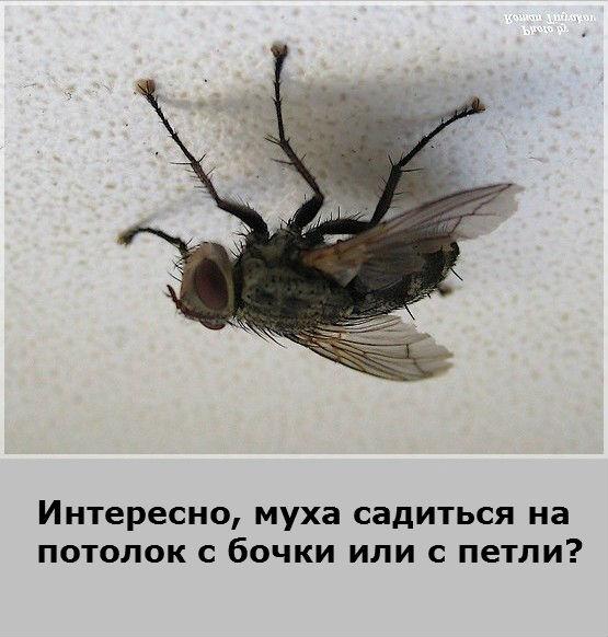 """Исследовательская работа на тему """" почему муха не падает с потолка"""""""