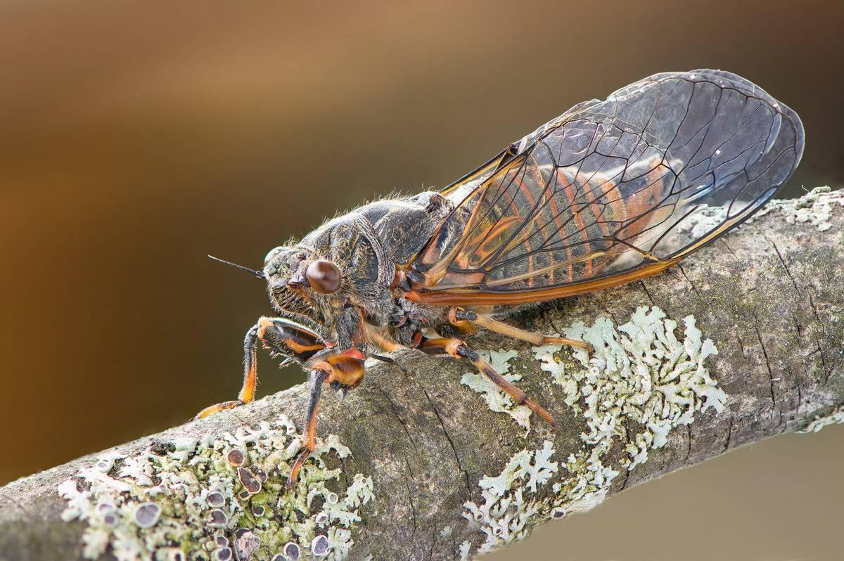 Виды мух - их фото, названия и описание