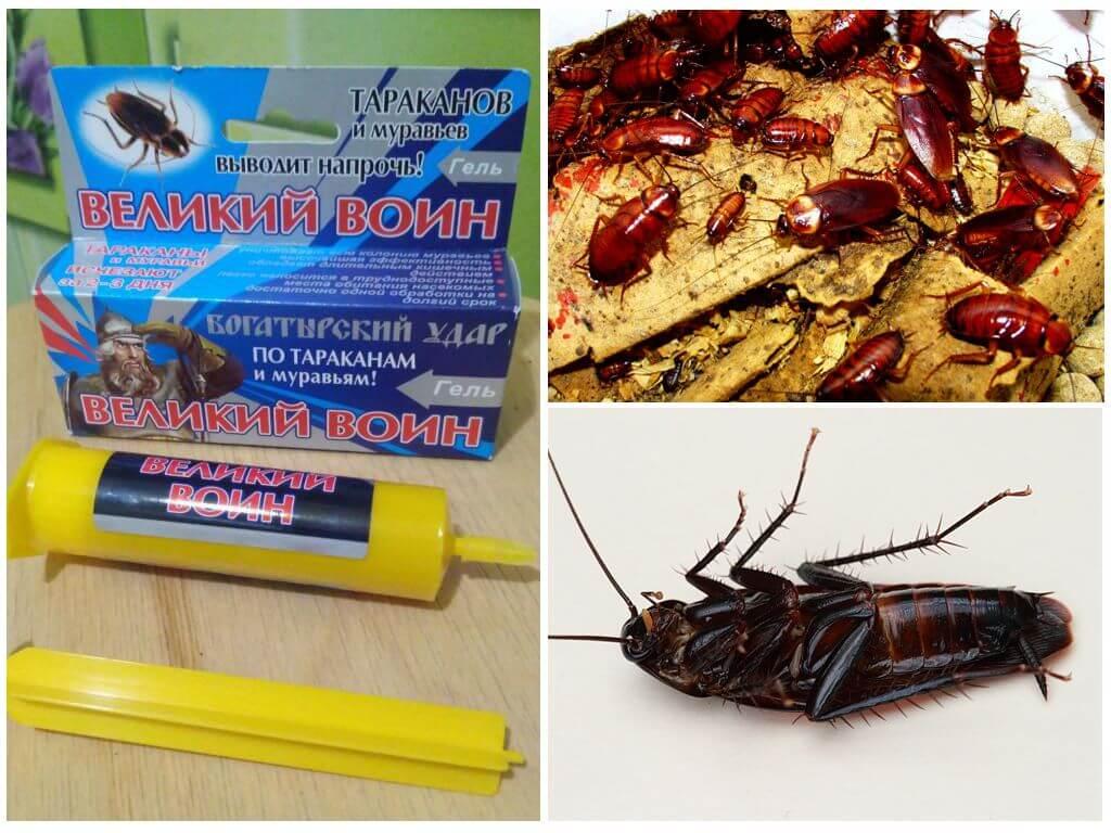 Средства от тараканов в квартире: самые эффективные и безопасные
