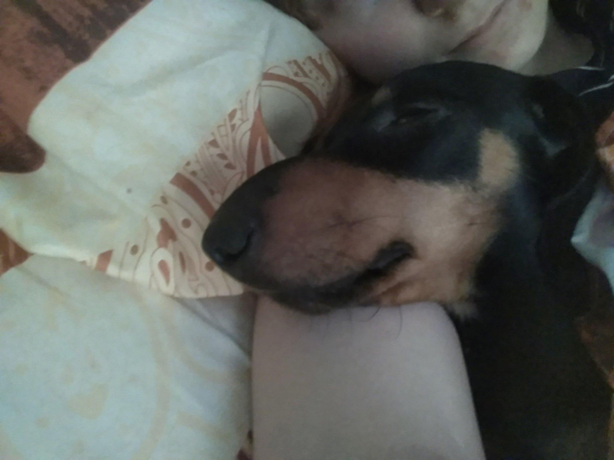 Как собак обезопасить от мошек. что делать, если собаку покусали комары и мошки
