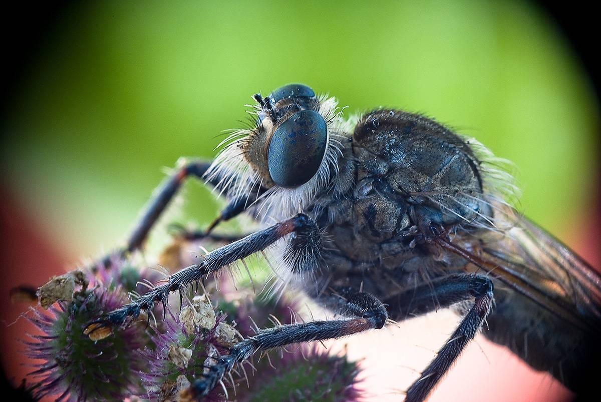 Цветок, который ест мух: почему он таким вырос и как охотится. разнообразие цветов-хищников