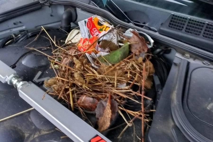 Как вывести мышей из машины, если она там завелась, способы отпугнуть