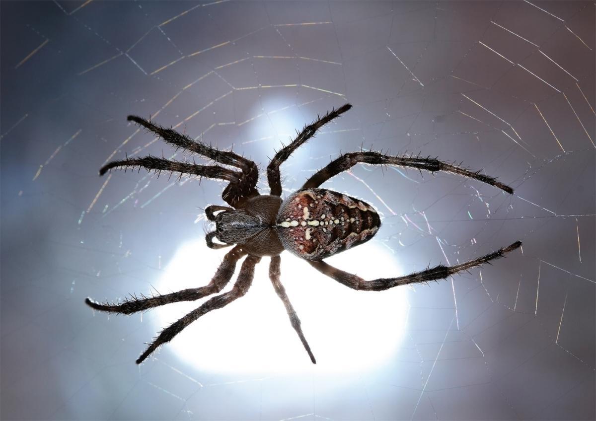 Разновидности пауков фото с названиями и описанием
