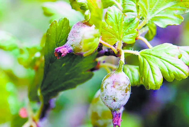Как бороться с паутинным клещом на смородине – 10 самых эффективных средств