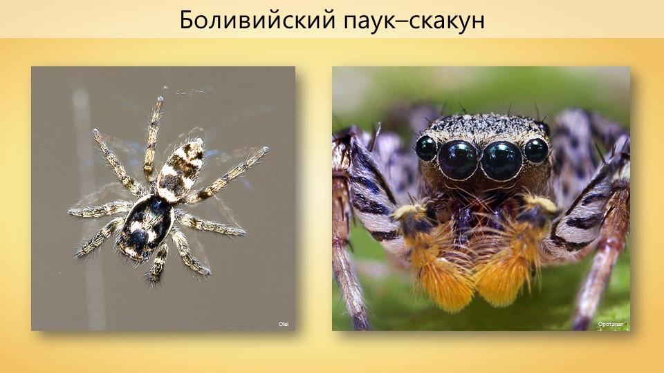 Паучительные истории: пауки, которые приносят нам пользу