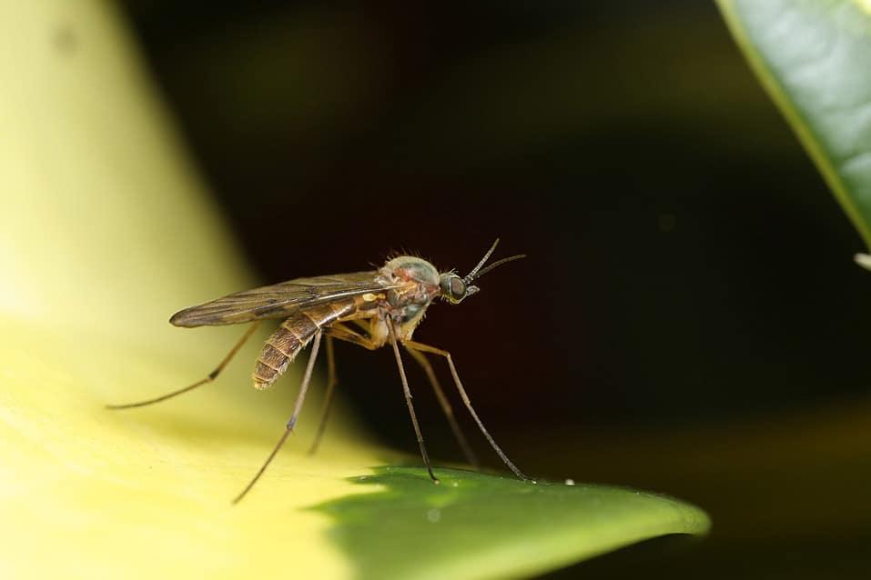 Для чего нужны комары в природе