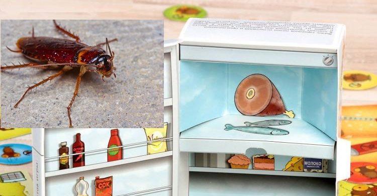 Что делать, если у вас тараканы в холодильнике, как их вытравить оттуда?