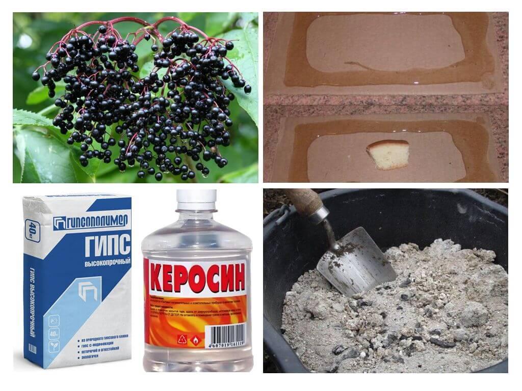 Эффективная отрава для мышей: виды и особенности применения, отзывы