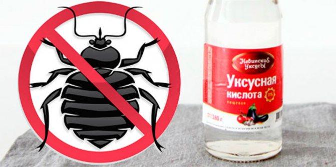 Что не переносят тараканы в квартире?