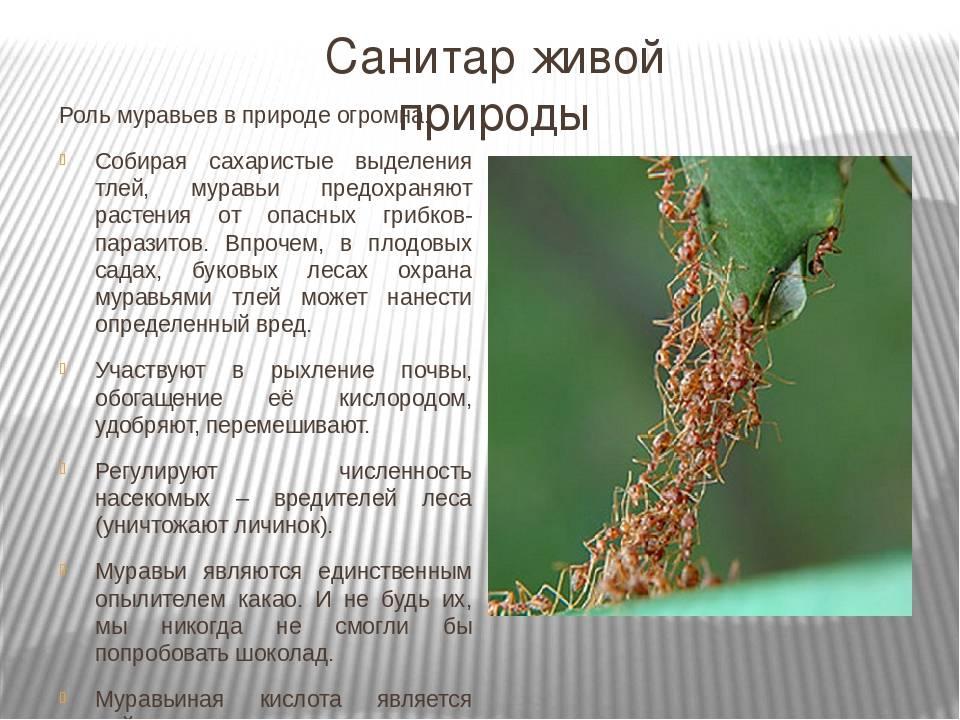 Зачем нужны осы в природе