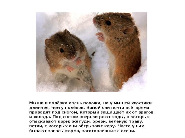 Какие животные впадают в спячку зимой и почему?