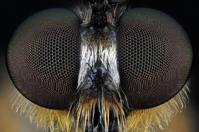 Как видит муха?