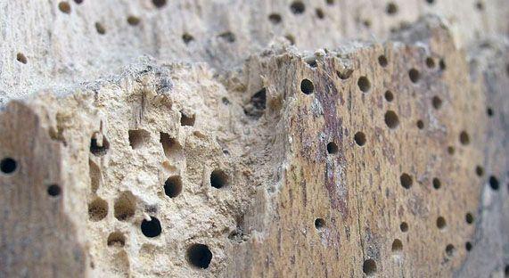 Как избавиться от жука-усача в деревянном доме