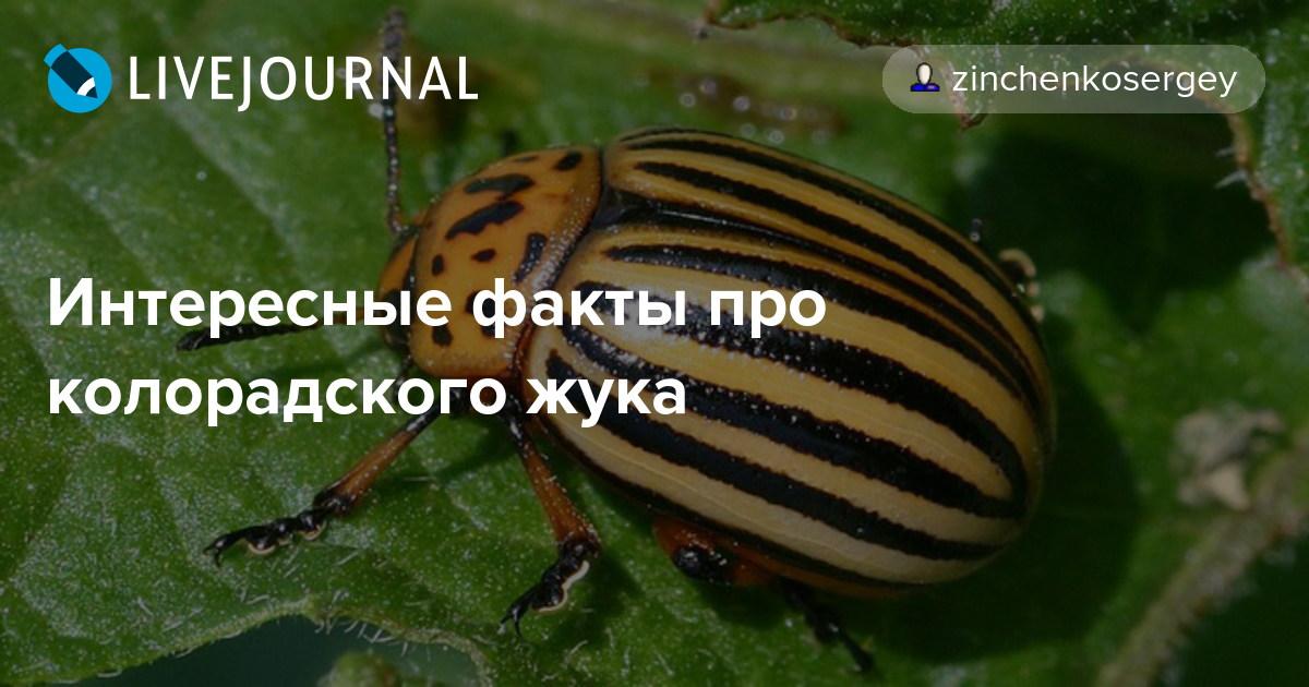 Колорадский жук - современные методы и народные способы борьбы