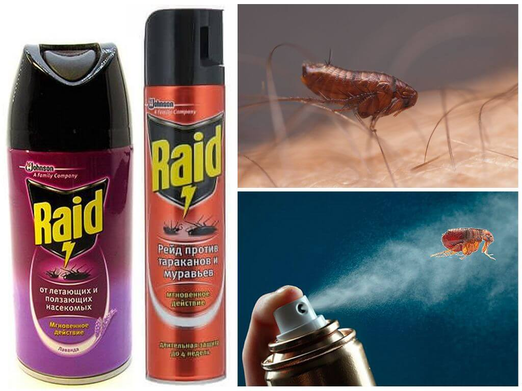Дихлофос от тараканов: как он действует и как им травить