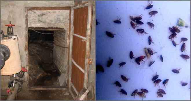 Как избавиться от блох в подвале
