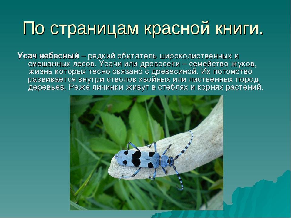 Описание жука красотелу из красной книги
