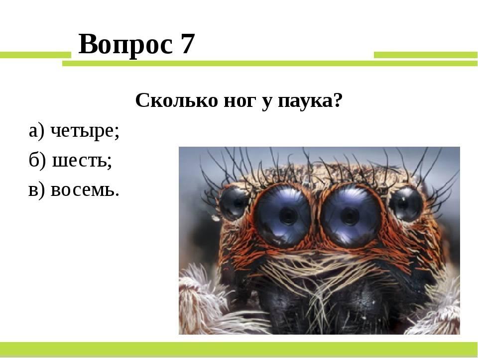 Внимание – паук: сколько ног у насекомого и зачем они нужны