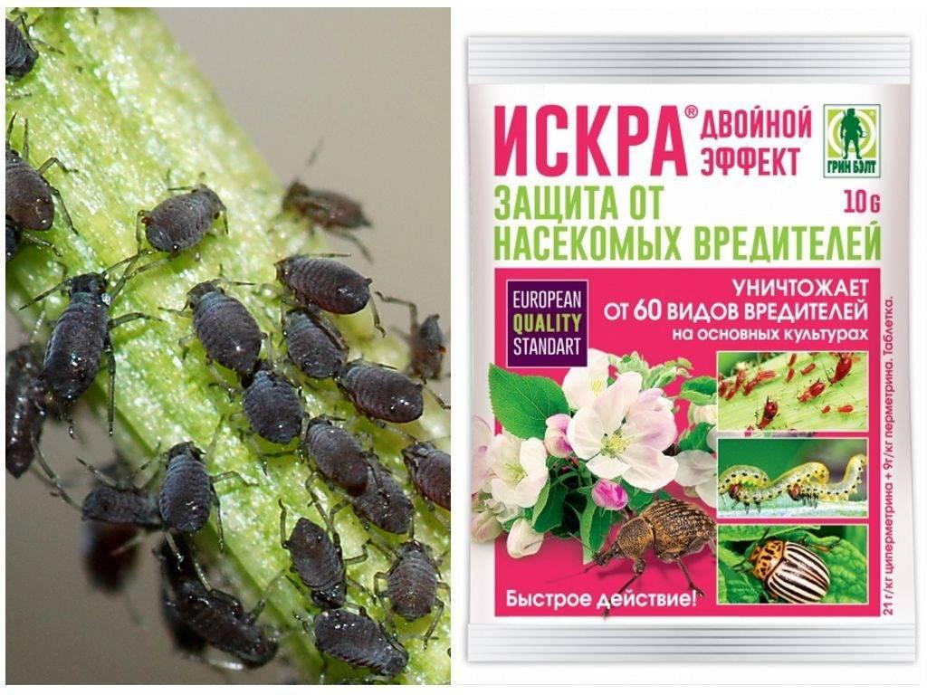 Инсектицид искра: виды, свойства, назначение, применение