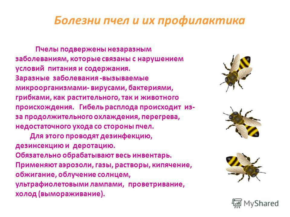 Особенности карпатской породы пчел