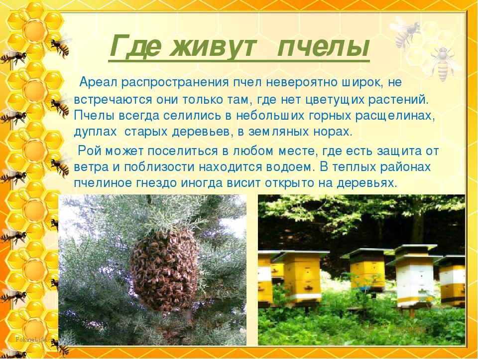 Какие породы пчел существуют