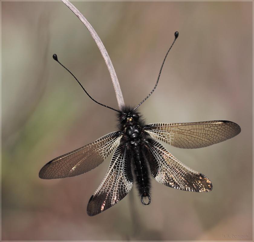 Описание и фото насекомых крыма