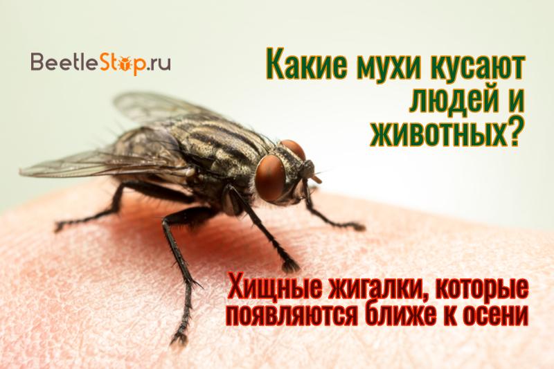 Почему кусаются мухи и можно ли защитить от них своего питомца!