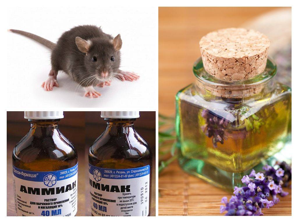 Чем отпугивать мышей в доме, неприятные для них ароматы