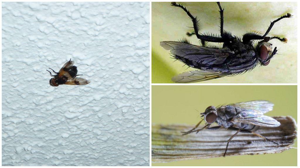 Каким образом муха садится на потолок? почему муха не падает с потолка