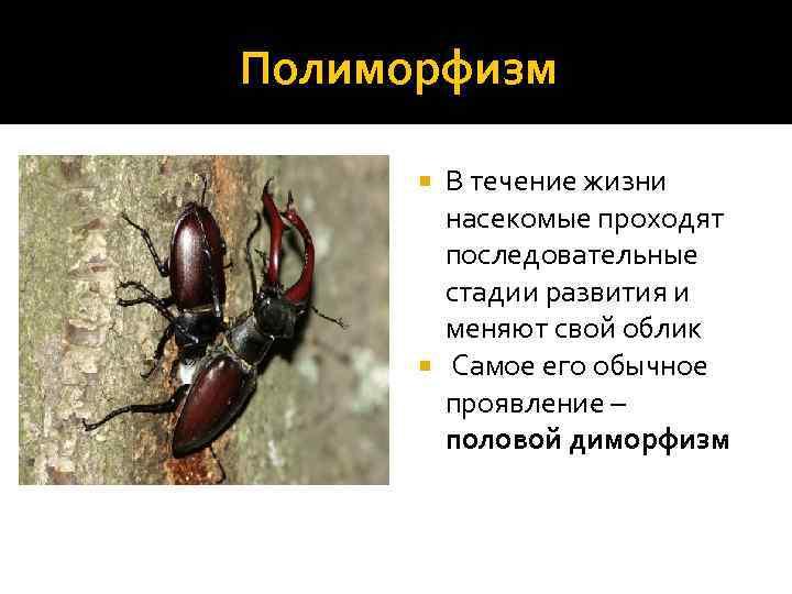 Лапландский таракан: интересные факты и образ жизни лесных насекомых