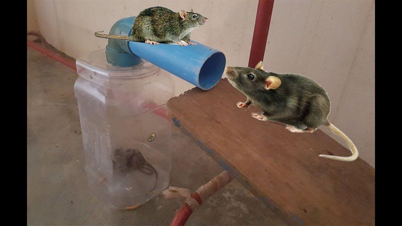 Выбор ловушки для мышей