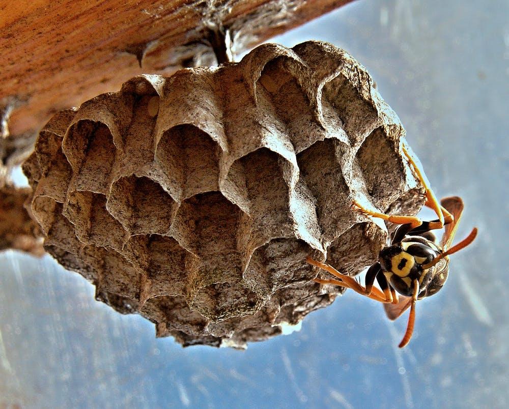 Гнездо на балконе: примета. про птиц, ос, шершней и прочие гнезда