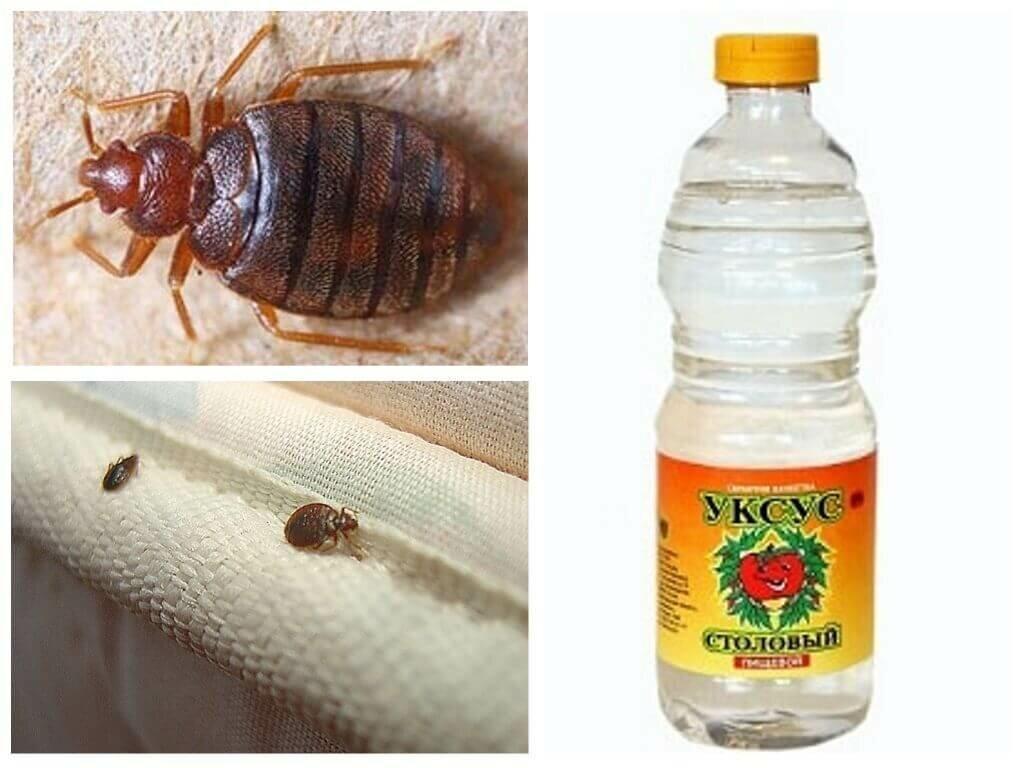 Чего бояться постельные клопы: народные средства – запахи уксуса, травы, воды, мороза, хлорки, света