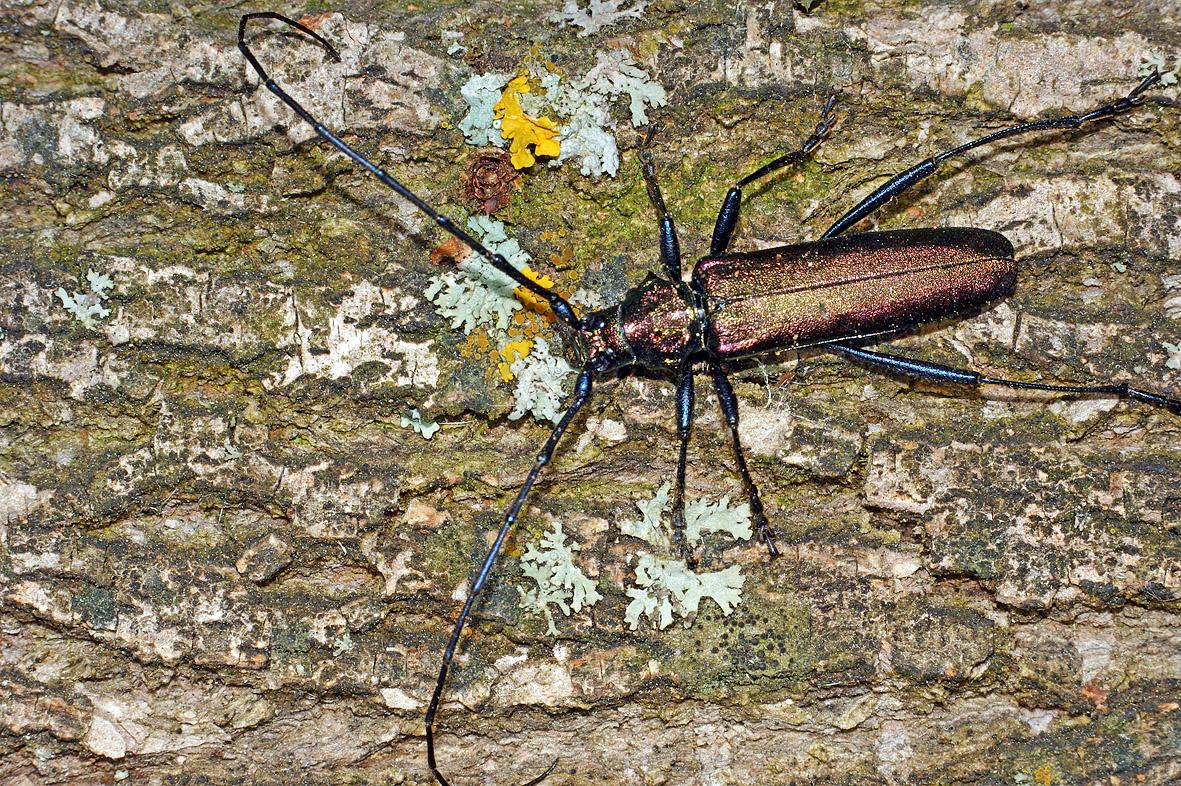 Жук усач насекомое. описание, особенности, виды, образ жизни и среда обитания жука усача   живность.ру