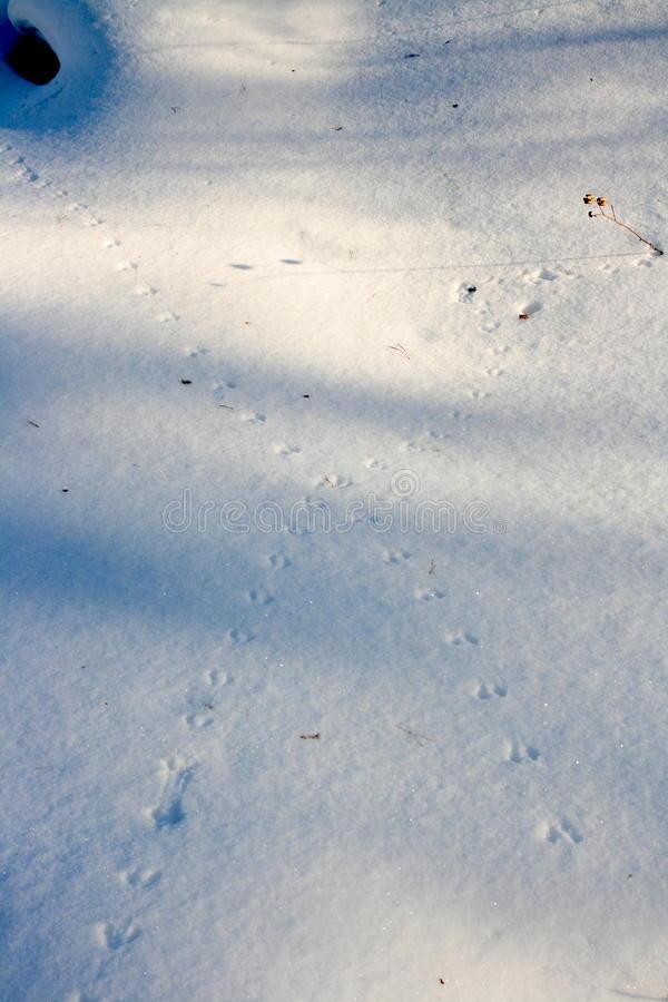 Следы животных на снегу: собаки и кошки, ласки и росомахи, оленя