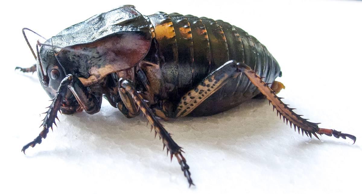 Виды кузнечиков - фото и названия | что говорят насекомые