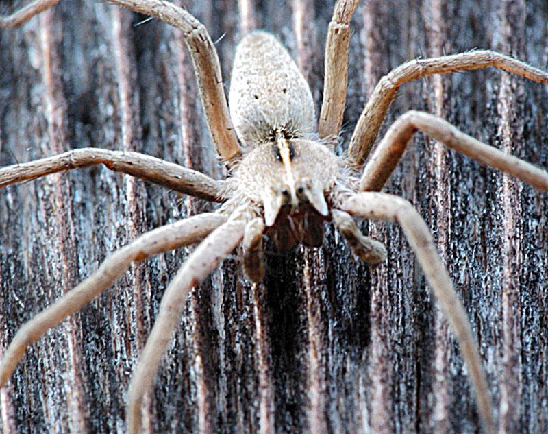 Описание и фото самых опасных пауков в мире