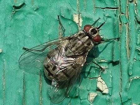 Анатолий садчиков: кусачая муха - жигалка осенняя