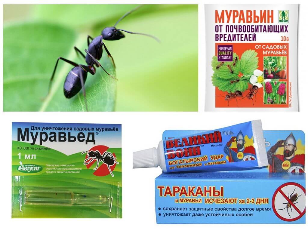 Борьба с муравьями на дачном участке