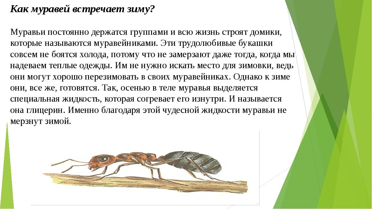 Как муравьи готовятся к зиме? | дачная жизнь