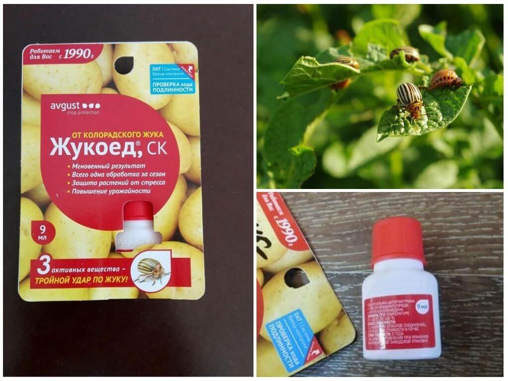 Самая эффективная отрава от колорадского жука. полный обзор топа ядов | народные знания от кравченко анатолия