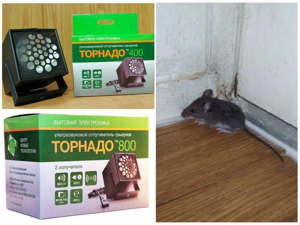 Электронные отпугиватели крыс и мышей, а также отзывы об их применении - какой купить?