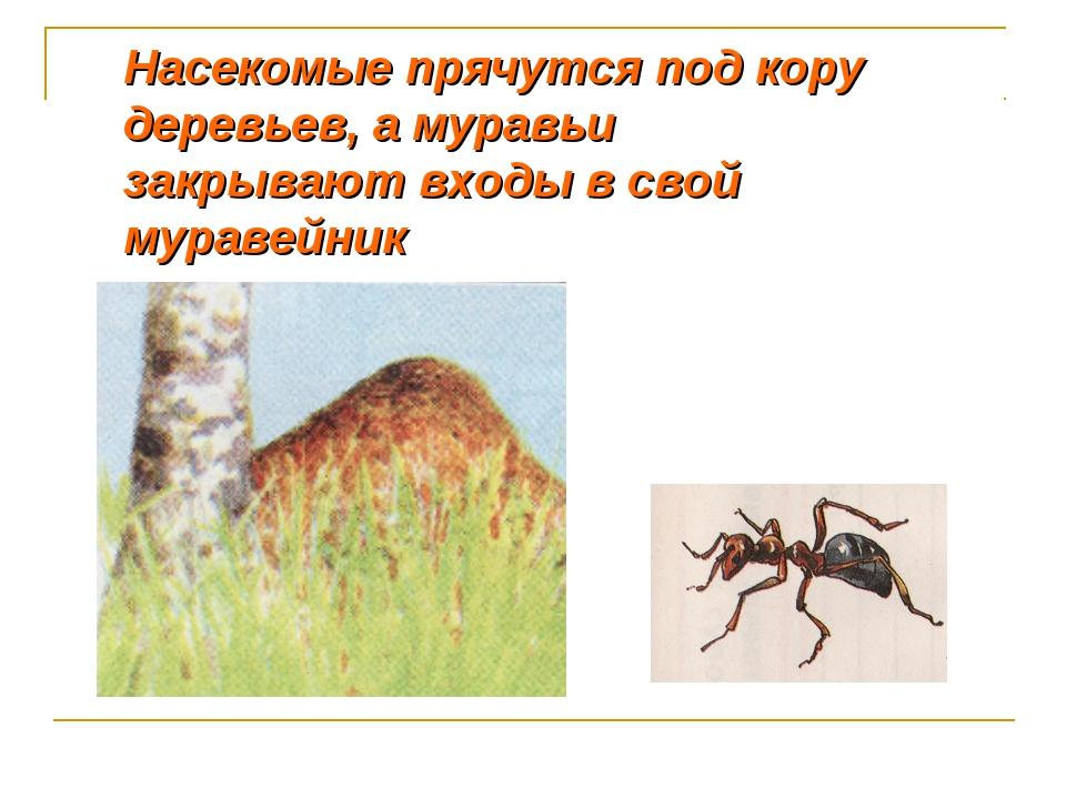 Как муравьи готовятся к зиме и где зимуют - коротко