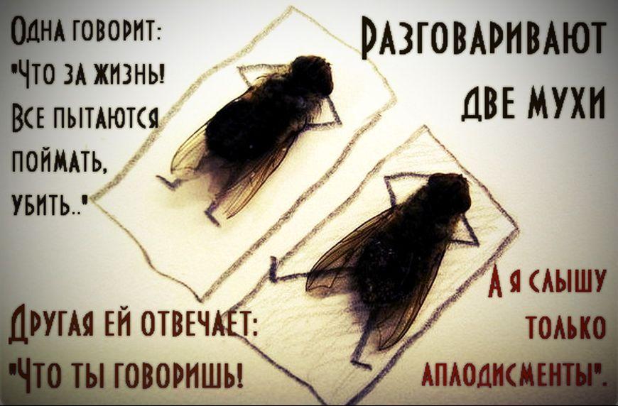 Решение проблем с мухами в доме