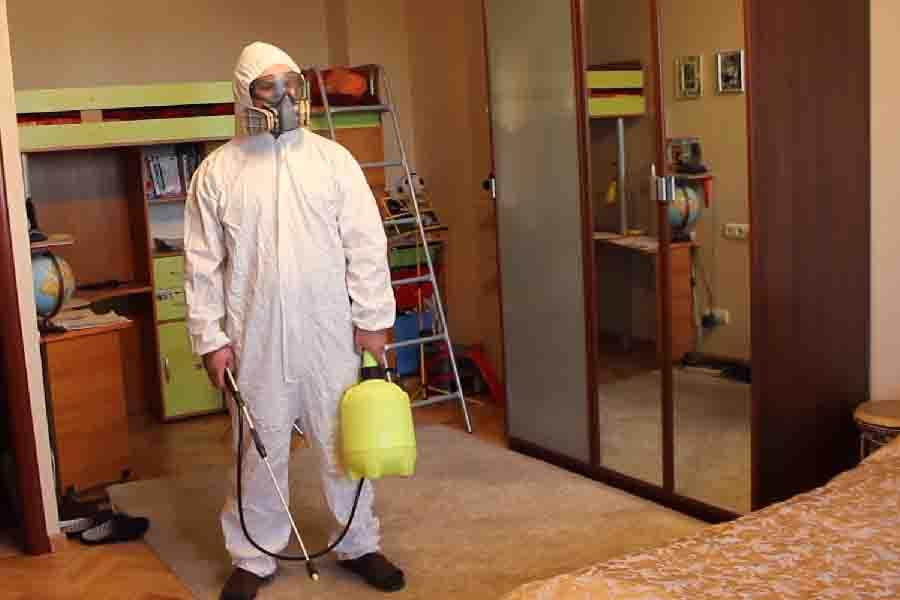 Чем самостоятельно травить клопов в квартире: самые эффективные химические и народные средства
