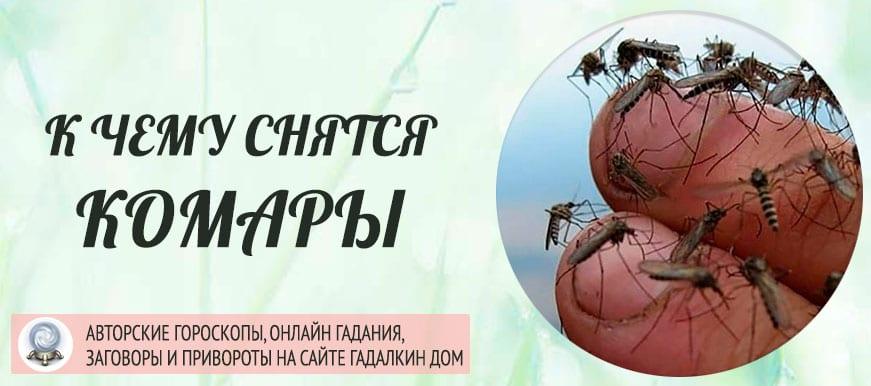 К чему во сне кусают много комаров. что означает образ комара во сне – толкования по сонникам и согласно народным поверьям. ваши действия во сне